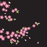 Ornamento floral - Sakura stock de ilustración