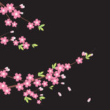 Ornamento floreale - Sakura Fotografia Stock