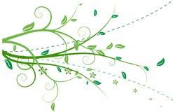 Ornamento floristico isolato Immagini Stock