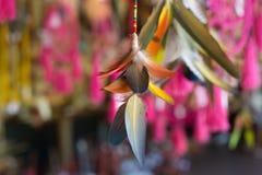 Ornamento indio, rosa, hermoso, plumas, fotos de archivo