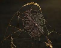 Ornamento iridiscente. Foto de archivo libre de regalías