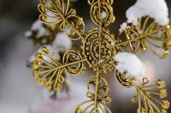 Ornamento nevado de oro de la estrella de la Navidad que adorna un árbol al aire libre Imágenes de archivo libres de regalías