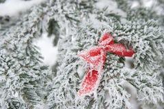 Ornamento rojo de la Navidad en un árbol de abeto Foto de archivo libre de regalías