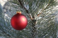 Ornamento rosso di natale nell'albero di pino dello Snowy Fotografia Stock Libera da Diritti