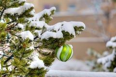 Ornamento verde fotografía de archivo libre de regalías
