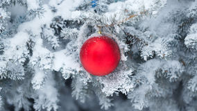 Ornamento vermelho do Natal da esfera Imagem de Stock