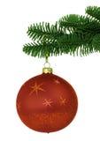 Ornamento vermelho do Natal no ramo nobre da árvore de pinho Fotografia de Stock Royalty Free