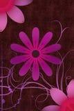 Ornamentos de la flor Fotos de archivo libres de regalías