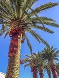 Ornamentos de la Navidad en árbol de palmas Imágenes de archivo libres de regalías