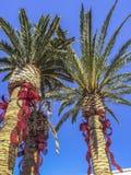 Ornamentos de la Navidad en árbol de palmas Fotografía de archivo