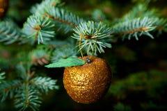 Ornamentos de la Navidad en el árbol de navidad vivo Fotografía de archivo libre de regalías