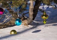 Ornamentos de la Navidad que cuelgan de árbol Imágenes de archivo libres de regalías