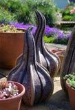 Ornamentos del jardín Fotos de archivo