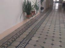 Ornamentos del piso y plantas de piedra de la casa de una estructura histórica Imagenes de archivo