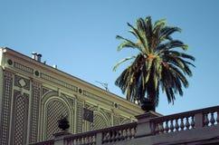 Ornamentos maravillosos con una palmera Fotografía de archivo libre de regalías