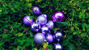 Ornaments and Grass stock photos