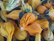 Ornametal gourds stock photos