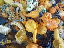 Ornametal gourds. Mix of ornamental gourds creates  display of fall colors Stock Photo