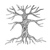 Ornate bare tree trunk with roots. Vector illustration vector illustration
