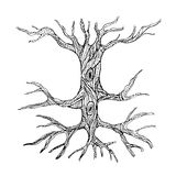 Ornate bare tree trunk with roots Royalty Free Stock Photography