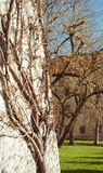 Ornate branching tree. And beige stone background royalty free stock image