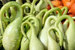 Ornate bright green pumpkins Stock Images
