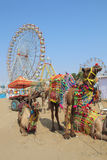 Ornate camels and ferris wheels at Pushkar camel fair Stock Photography