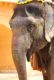 Ornate elefant in India Royalty Free Stock Photo