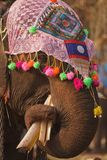 Ornate elephant eating Royalty Free Stock Photos