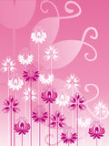 Ornate flowers on pink background. Ornate white and pink flowers on pink background Royalty Free Stock Image