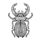 Ornate Giant Stag Beetle Stock Photo