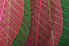 Ornate leaves Stock Images