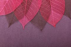 Ornate leaves Royalty Free Stock Photos