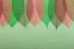 Ornate leaves Stock Photo