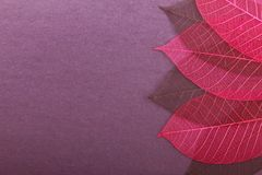 Ornate leaves Royalty Free Stock Image