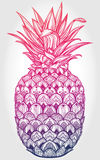 Ornate pineapple fruit vector illustration. Stock Images