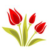 Ornate red tulips Stock Images