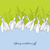 Ornate Snowdrop flowers or Galanthus in white on the background with grass.. Greeting card with floral elements in contour style. Traditional spring background Royalty Free Stock Images