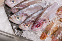 ORNATE THREADFIN BREAM cover with ice in seafood market. Royalty Free Stock Images