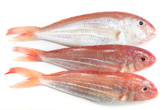 Ornate Threadfin Bream,on white background. Royalty Free Stock Image