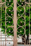 Ornate wrought-iron elements of metal gate decoration Stock Images