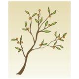 Ornement décoratif de fleur Images libres de droits