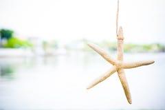 Ornement d'étoiles de mer Images libres de droits