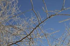 Ornement d'hiver des branches des arbres image stock