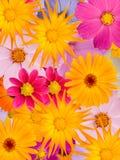 Ornement de fleur Photo libre de droits