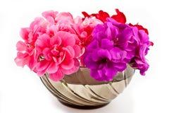 Ornement de fleur de géranium Photos libres de droits