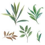 Ornement des feuilles peintes avec l'aquarelle illustration de vecteur