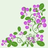 Ornement des orchidées dans un modèle à jour Photo stock