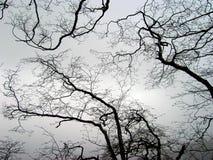 Ornement en bois Photographie stock libre de droits