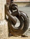 Ornement en bronze de rue de serpent Image stock